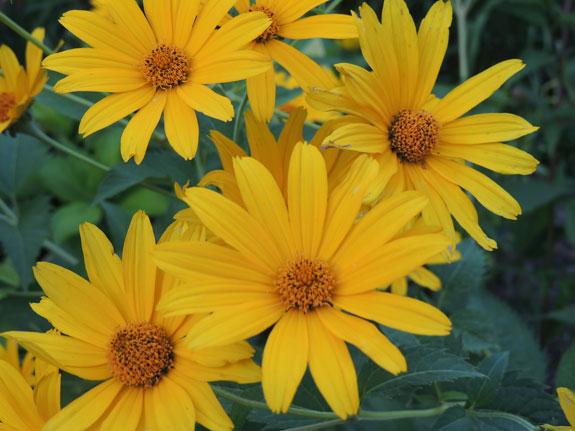 Yellow Flowers Lorraine Ball